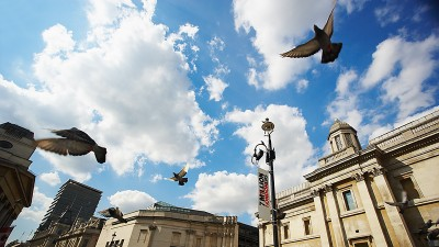 LondonBirds