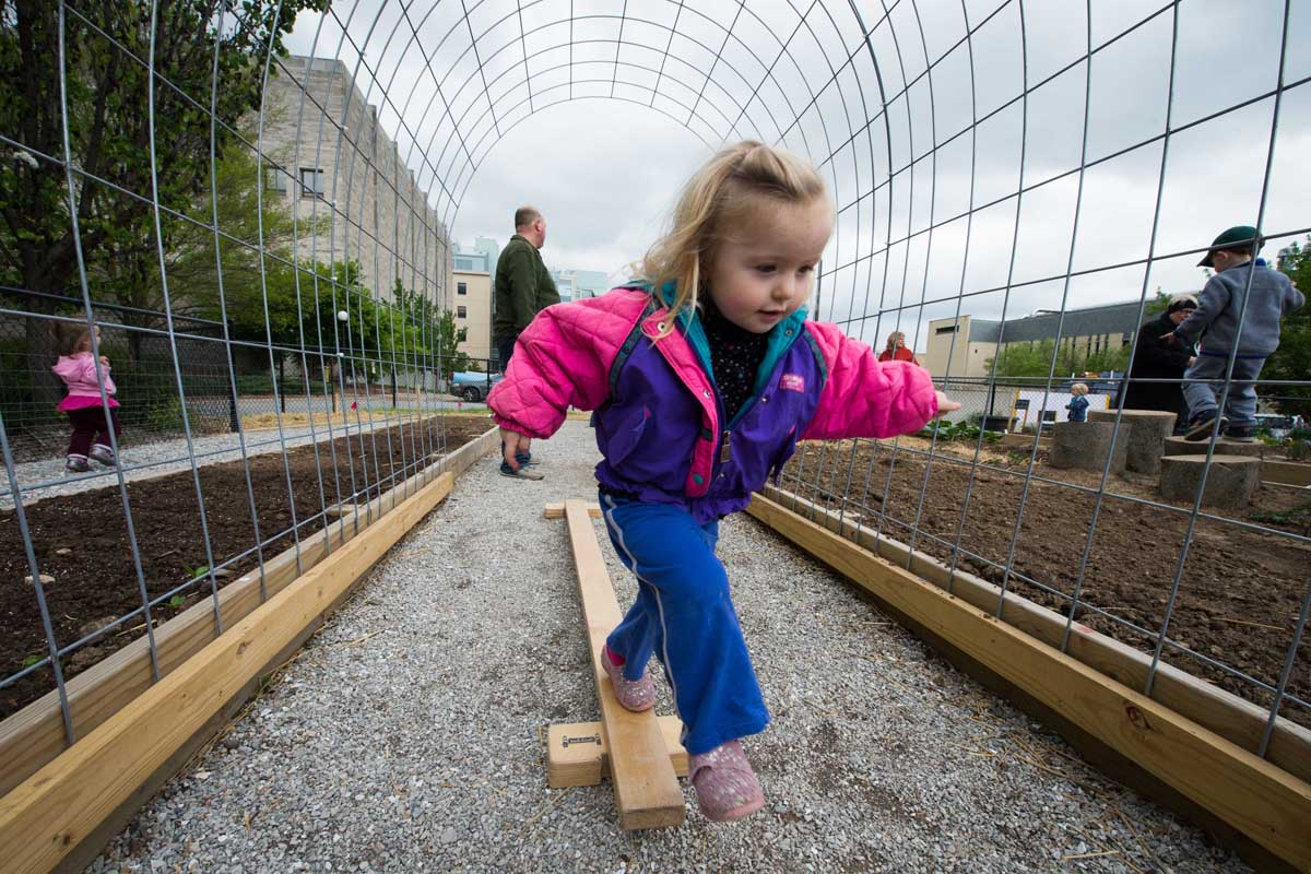 A child from yellow door using the balance beam to navigate through the tunnels. Eventually these tunnels will be covered with pole beans, tomatoes, and cucumbers and provide much needed shade in the garden and a vertical dimension. The ripe fruits will hang down and be easily harvested. We have the balance beam set up to allow for gross motor develop and challenge the children to learn what their bodies can do in our garden. For children in this age group (2.5 - 4) these tasks are challenging and require significant coordination and awareness.
