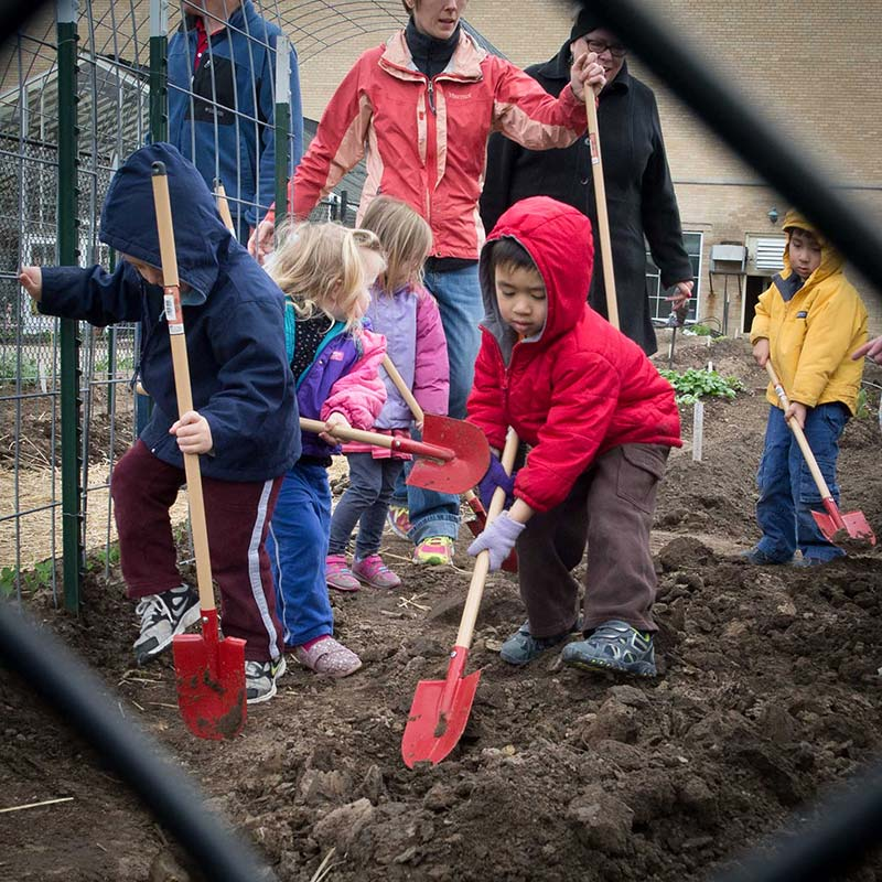 Children from Yellow Door using tools in the People's Garden. The children are preparing ground that we will plant pumpkins and yellow squash. We have functional child-sized tools to allow them to participate in as much of the work as possible. They are learning to use new tools but also looking for worms and grubs that live in our soil. This is physically in the USDA-ARS People's Garden. We have partnered with the Plant Genetics Research Group based out of Curtis hall since 2012 to provide meaningful learning experiences in the garden for children ages 1.5 - 5 years old.