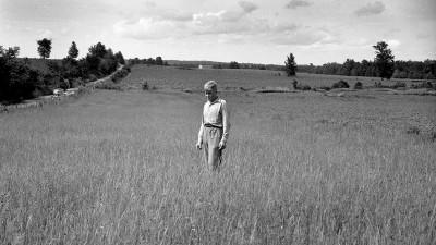 Boy in field.