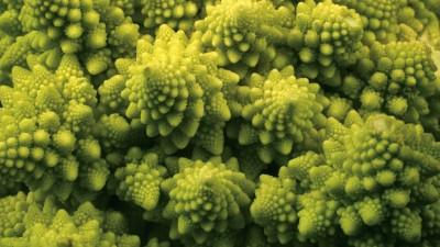 Closeup of broccoli.
