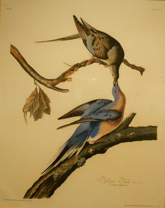 Watercolor painting of two birds.