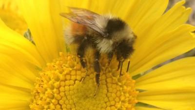 Bee in a flower.