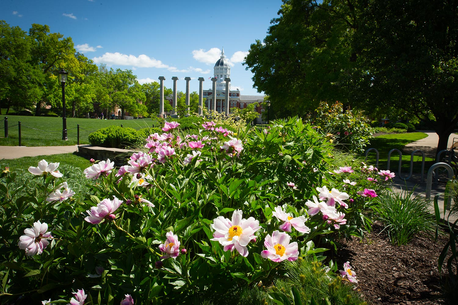Flowers adorn campus on the northwest corner of The Quad.