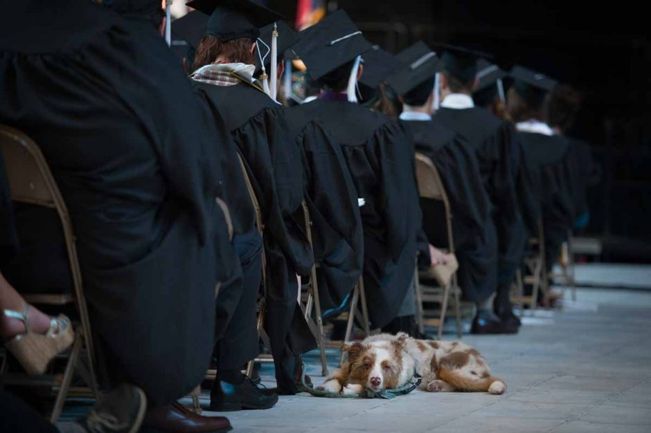 A dogged pursuit of obtaining a college degree led more than a thousand students to graduate from the School of Art & Sciences. Photo by Shane Epping.