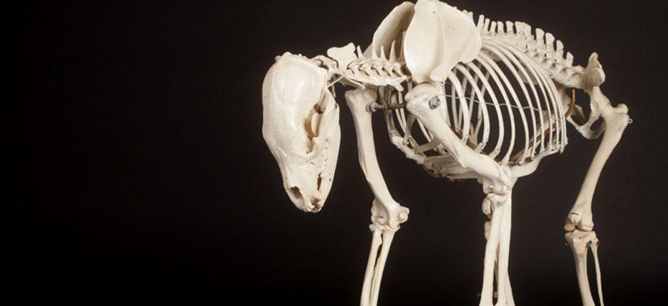 bones_banner