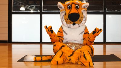 Truman the Tiger in lotus pose.