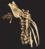 ancient spine bones