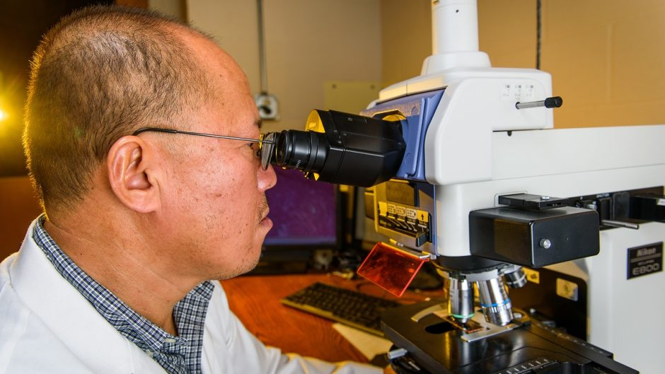 This is a picture of Dongsheng Duan looking into a microscope