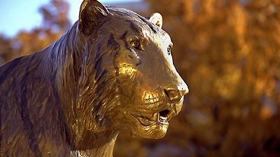 Picture of the Tiger statue on campus