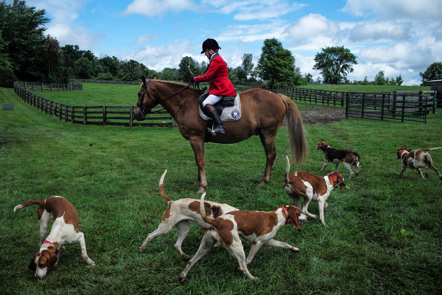 dogs circling horse