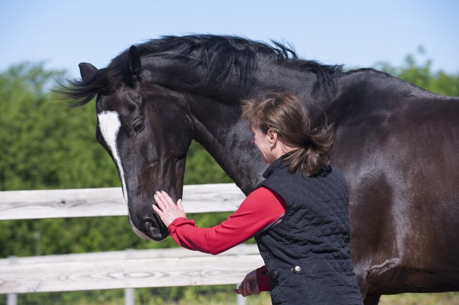 Russell now checks Signature's heartbeat daily with a stethoscope and is hoping to perform with him in the national dressage show this fall.