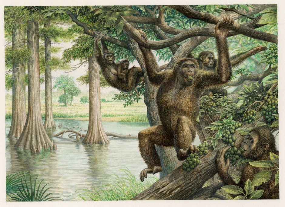 Illustration of Rudapithecus