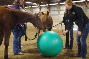 This is a picture of two horses interacting with a ball.