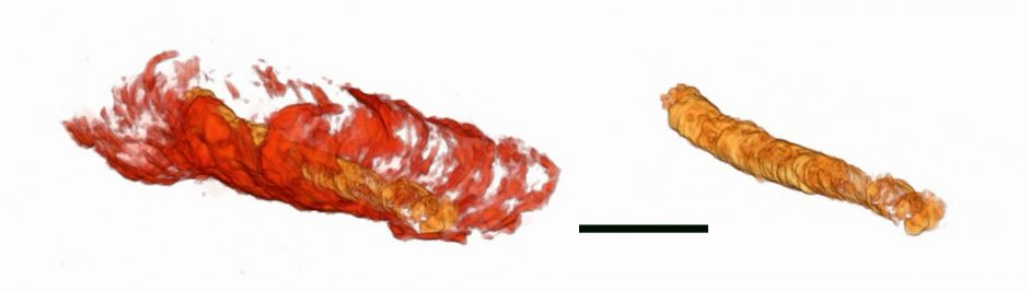 3D image of fossilized digestive tract