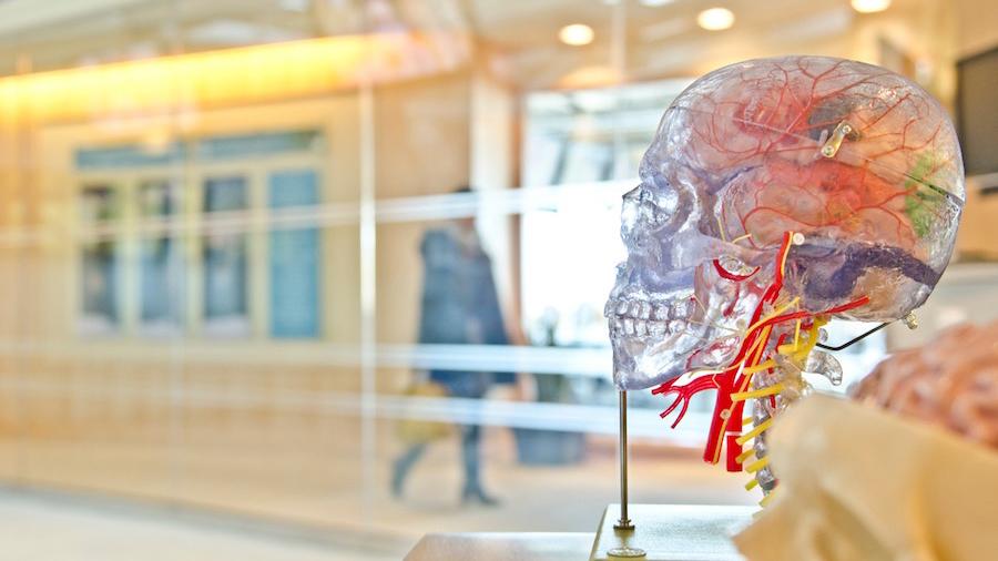 brain medical art
