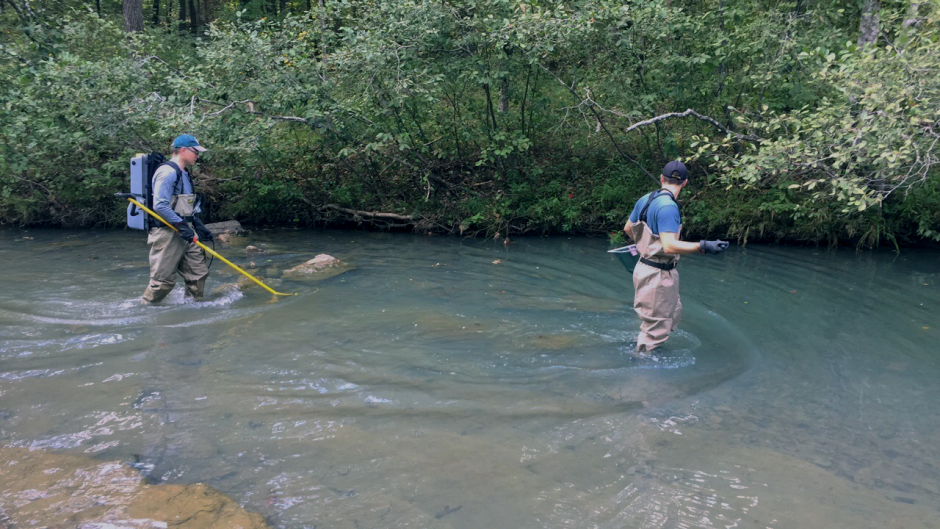Two men walking up a creek looking for smallmouth bass to collect for samples