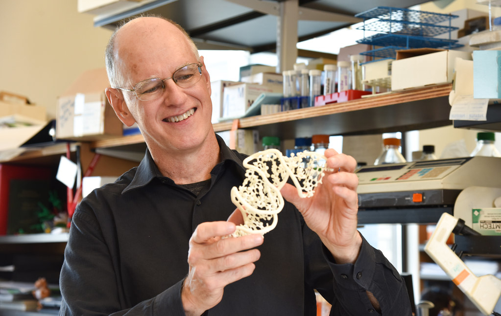 Donald Burke-Agüero examines his model of the RNA protein structure.