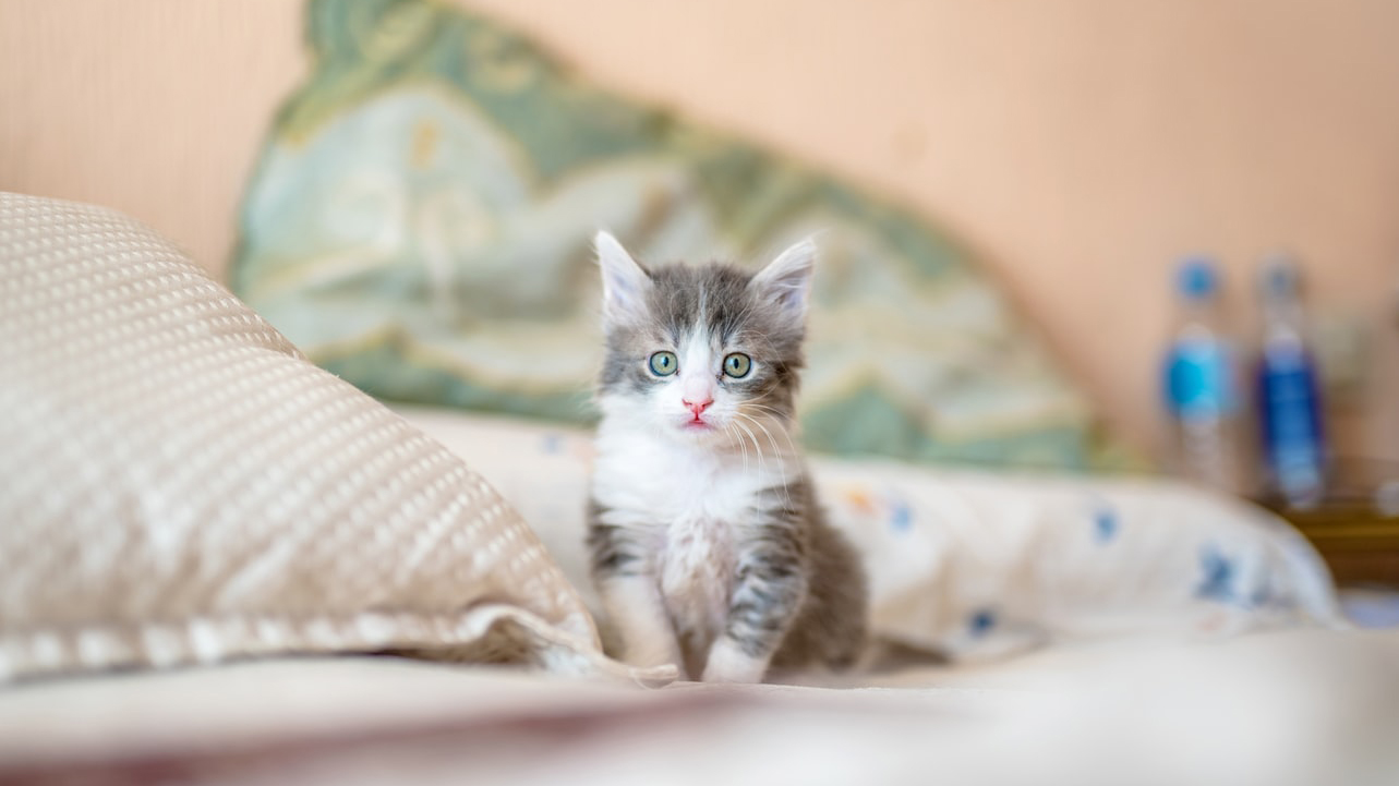 This is a photo of a cat. Source: Shutterstock