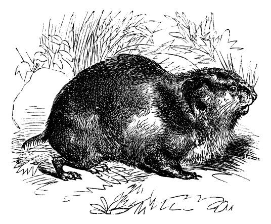 lemming illustration