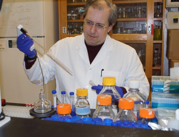Robert A. Kazmierczak with the Cancer Research Center, helped developed a genetically distinct and non-toxic strain of Salmonella called CRC2631 to select and kill cancer cells. Kazmierczak has a courtesy appointment with the Division of Biological Sciences at the University of Missouri.