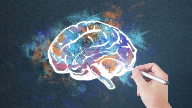 artist rendering of a brain