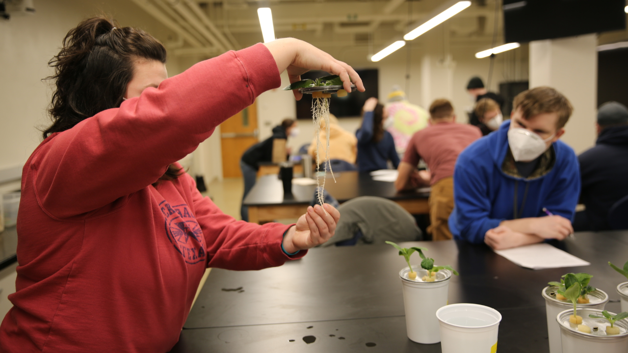 This is a picture of a student studying a plant during a class in the Kirklin Lab.