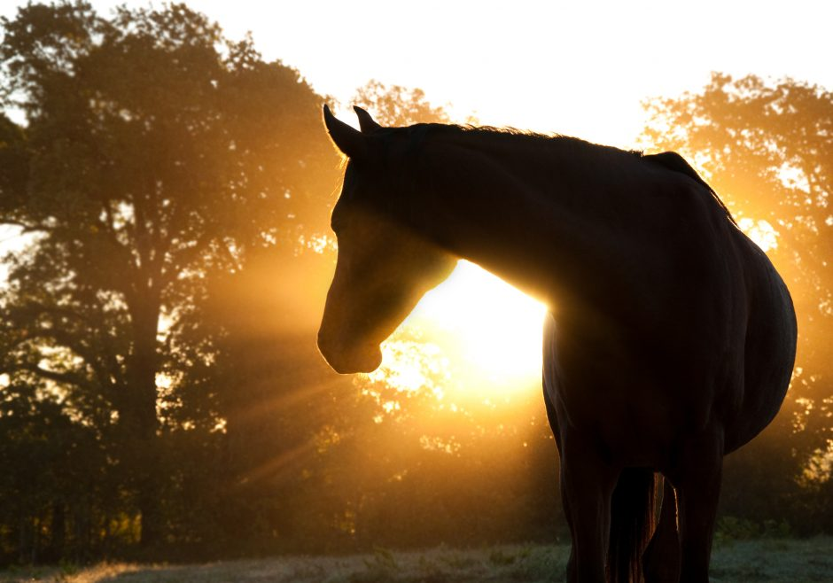 This is a photo of a horse. Source: Shutterstock