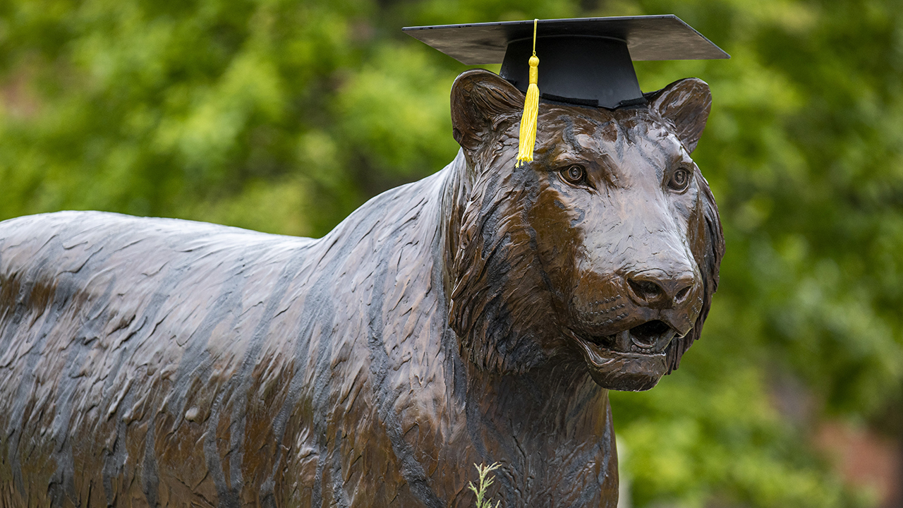a tiger statue with a graduation cap on