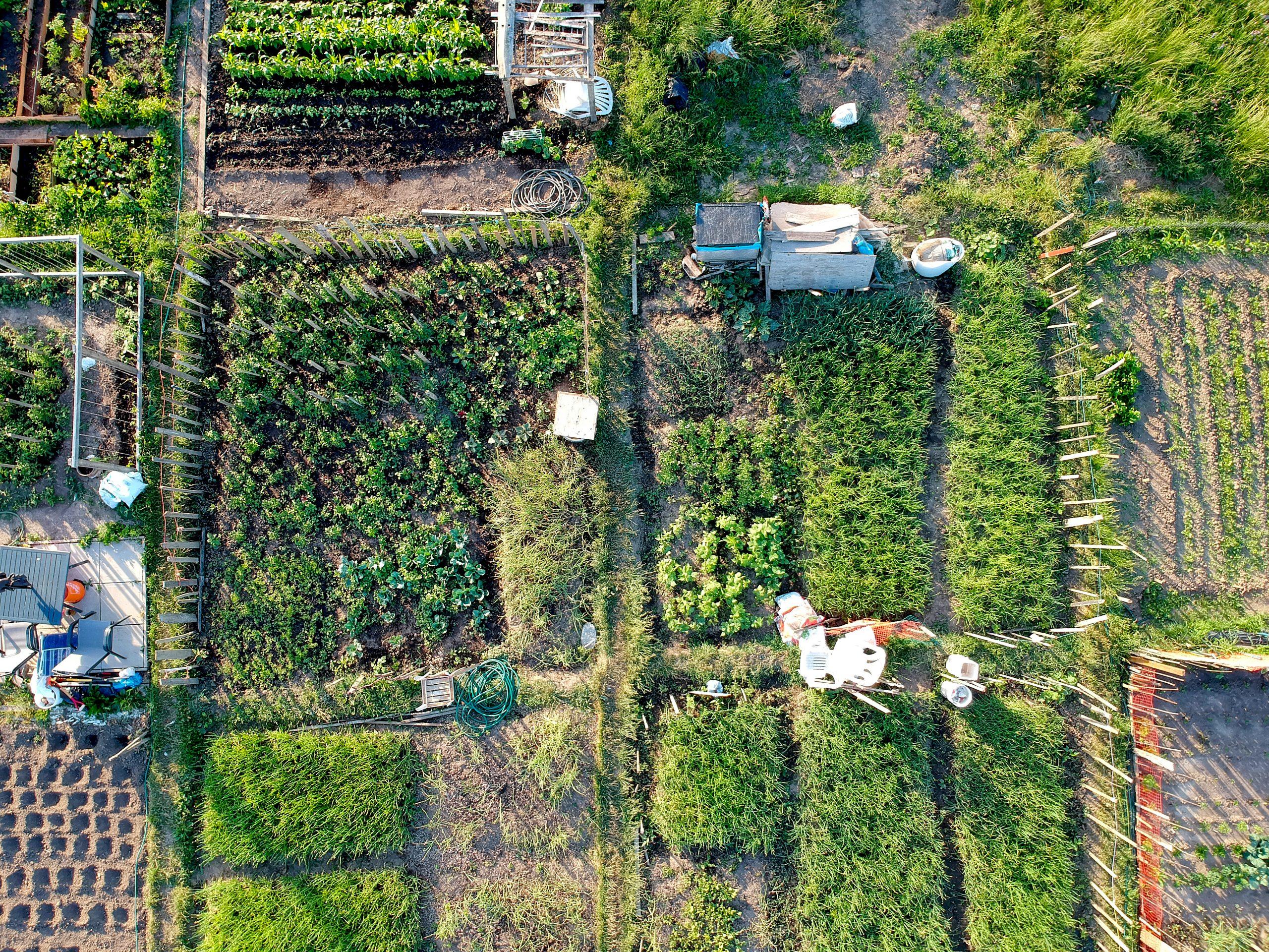 Aerial view of urban garden