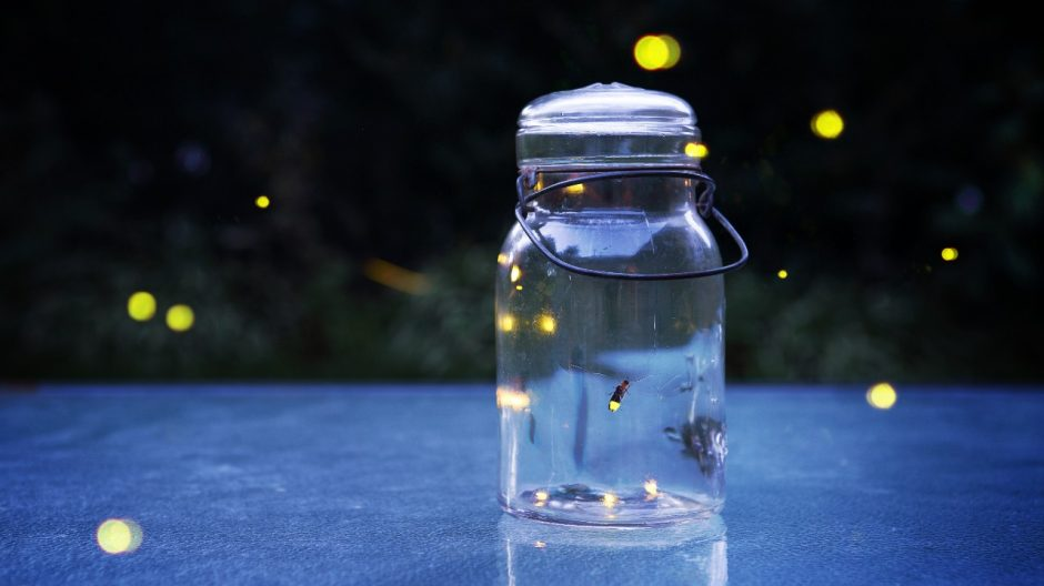 Twilight photo with fireflies Source: Shutterstock