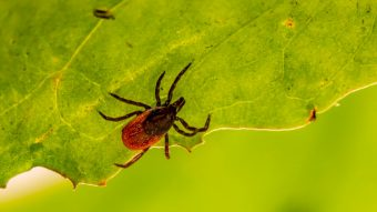 This is a photo of a tick.