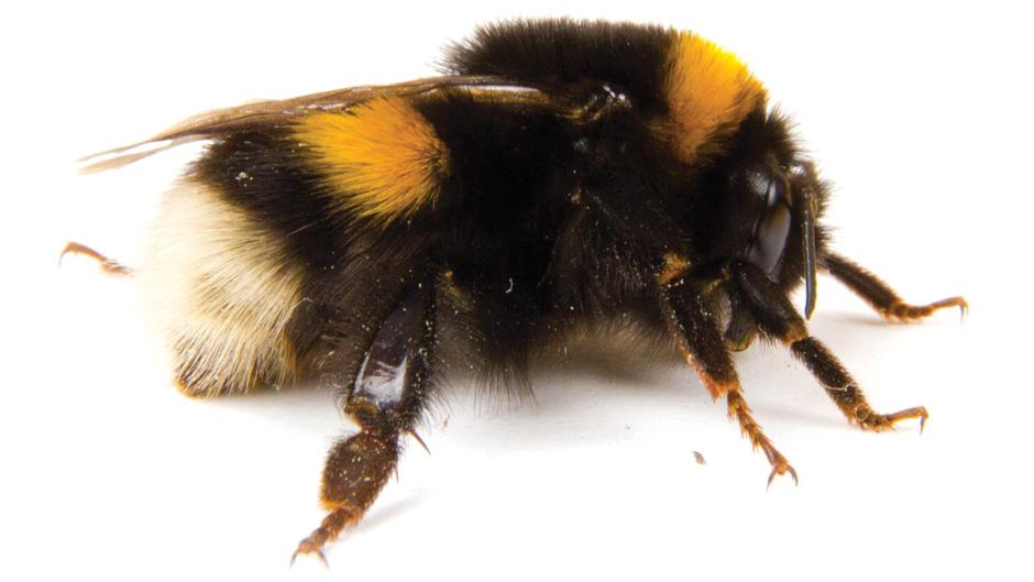 up-close shot of a bee