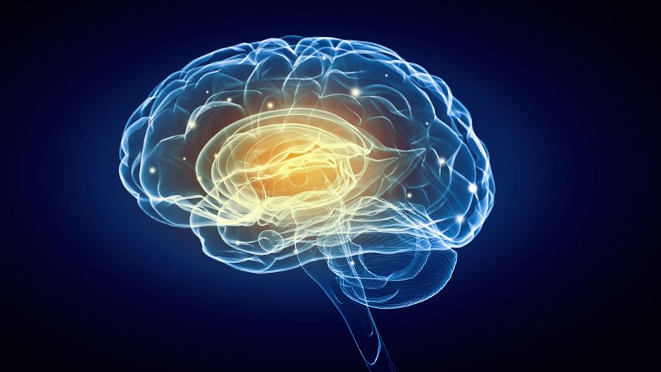 Conceptual picture of the brain